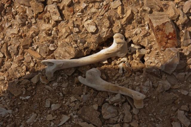 nahal-tzin-Feb-2012-07.jpg