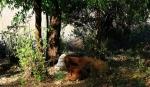 ramot-menashe-22-12-2013-30.jpg